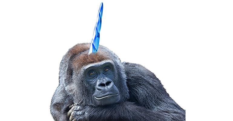 Bittere Schokolade    Gorillas Einhorn?     Komfort für zu Hause Food-Getty Images