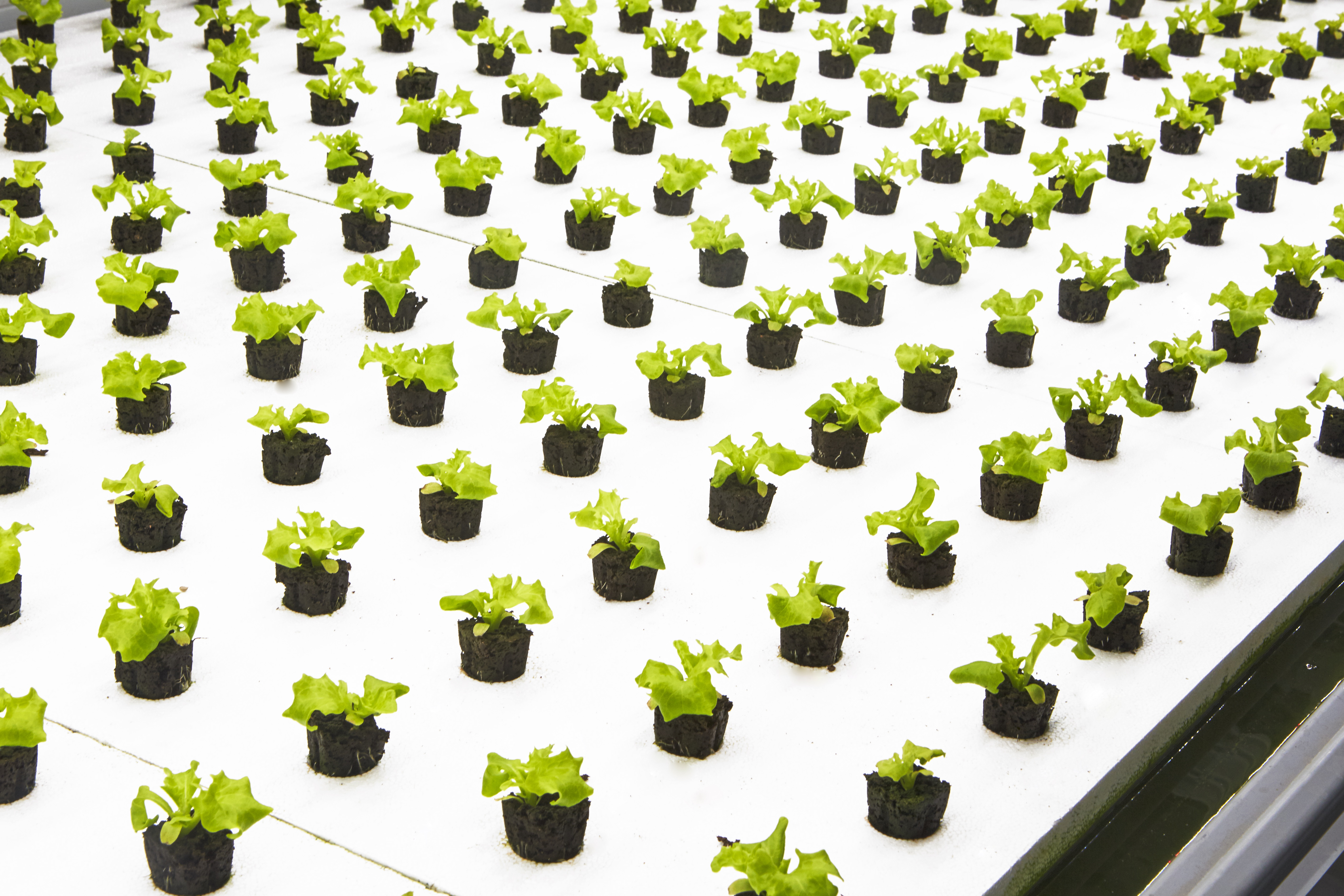 Bowery merges tech & agriculture for sustainable, local greens | New ...