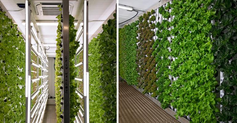 Natural Grocers-GardenBox-hydroponic farm.jpg