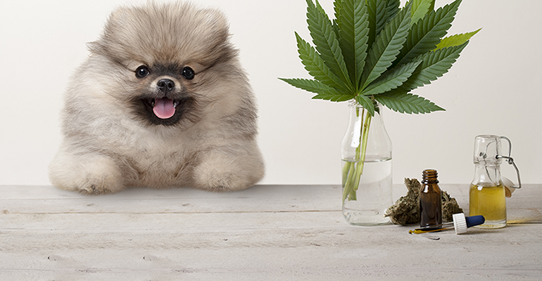 Can You Use CBD for Animals?