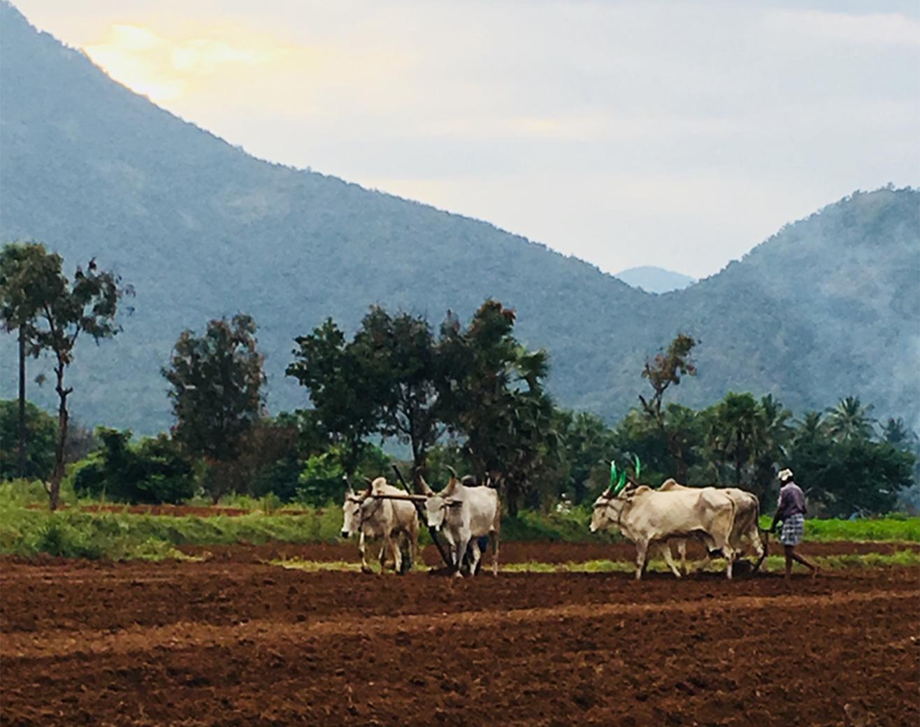 Farm being tilled