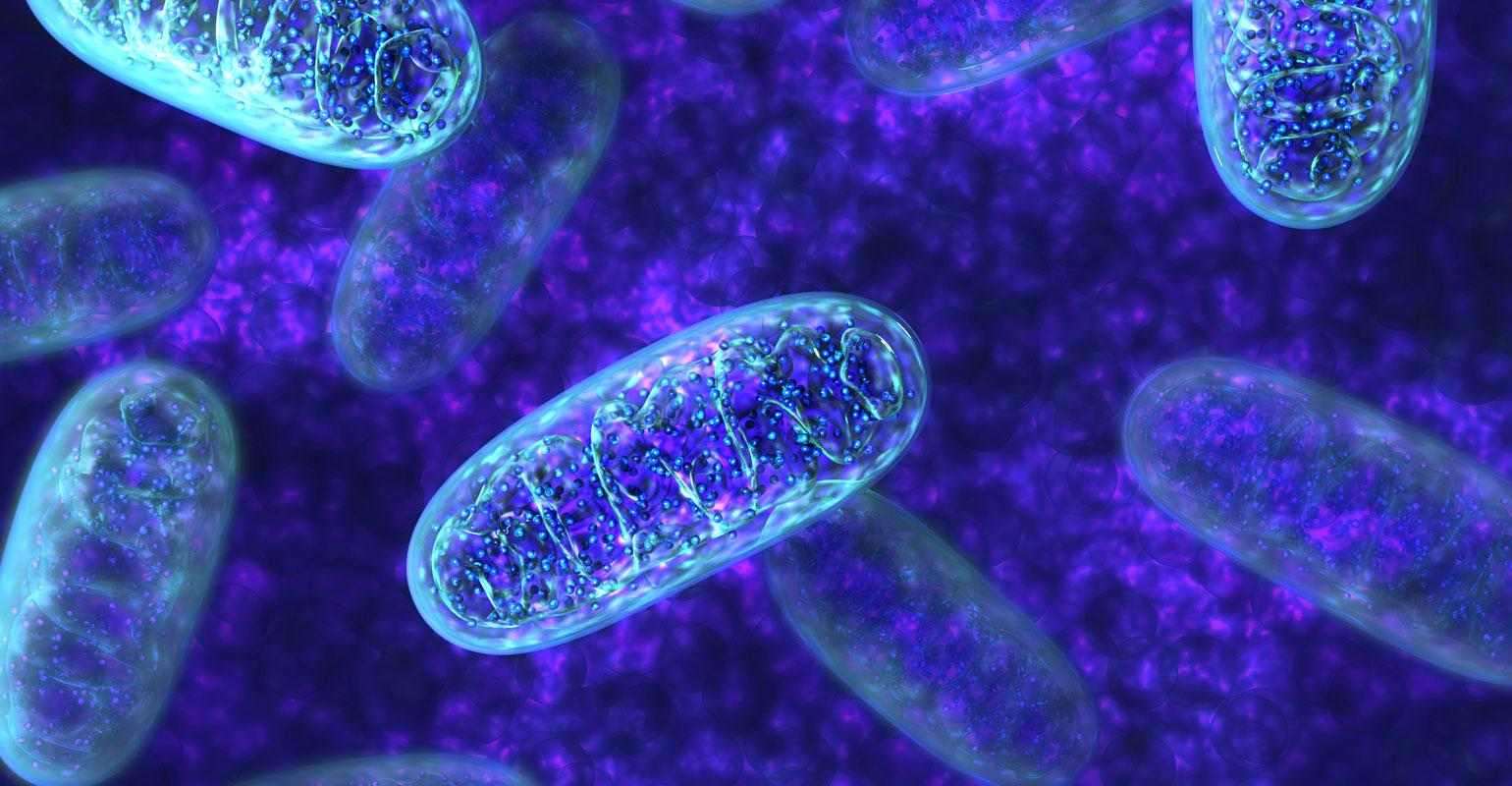 6 nutrients that improve the well-being of mitochondria ...