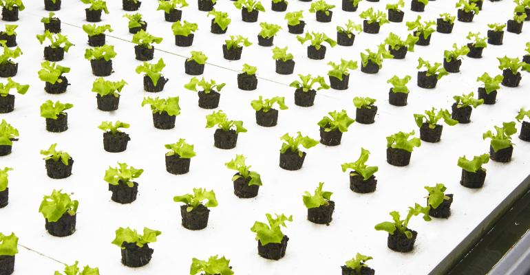 Bowery Farm Lettuce
