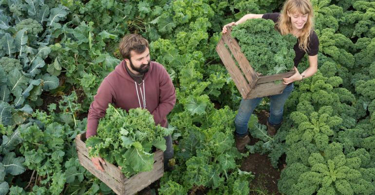 Organic Farmers in Kale