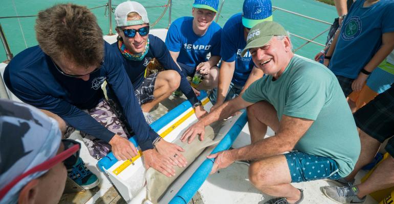 Tempo Shark Tagging