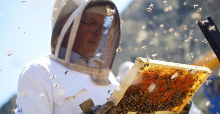 Wedderspoon Organic honey