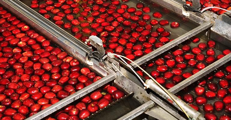 apples on conveyor belt