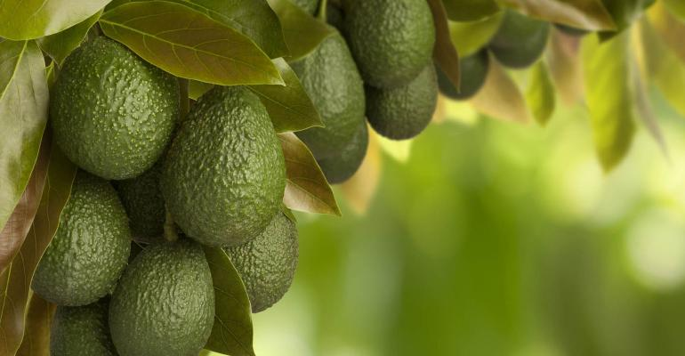 avocado-tree-apeel-sciences-promo.jpg