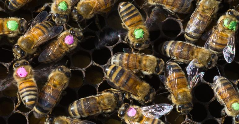 Bee research at the University of Texas at Austin