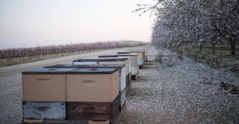 Beehives Almond Orchard