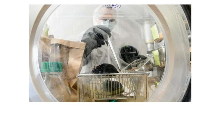 Nacho Vivas of the Rey Lab in the Bacteriology Department, checks on a group of germ-free mice inside a sterile lab environment. A new study showed gut bacteria use fiber to improve heart health in mice.