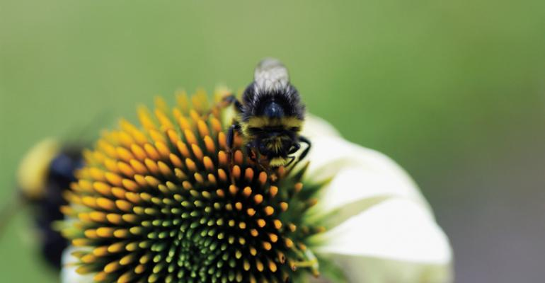 bumblebees pollinate
