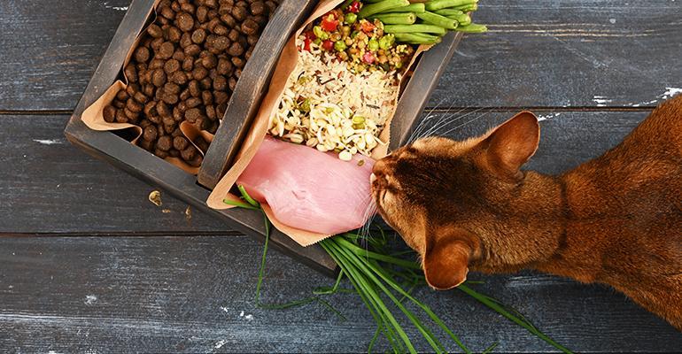 cat-all-natural-pet-food.jpg