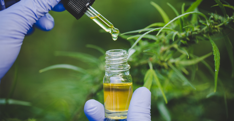 CBD oil tincture with gloved hands