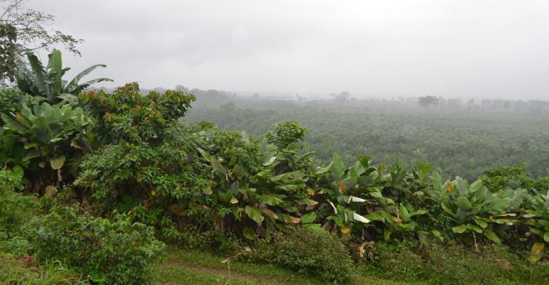 Ecuador forest
