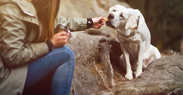 dog-feeding.jpg