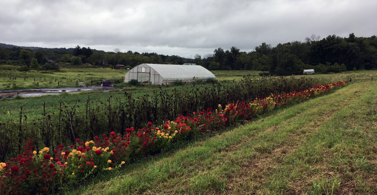 Greenhouse on a farm