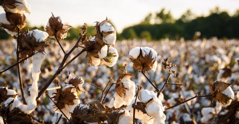 sustainable cotton initiative