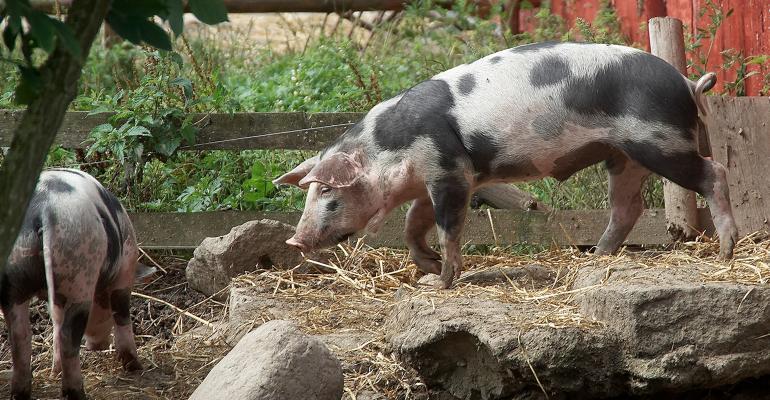hog farm