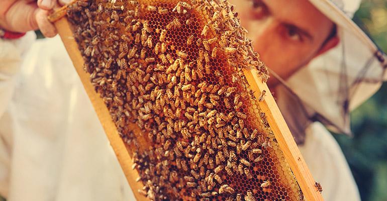 honeybee-beekeeper.jpg