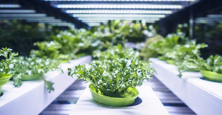 hydroponic-farm.jpg