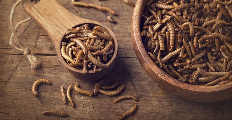 larvae-maggots-food-ingredient.jpg