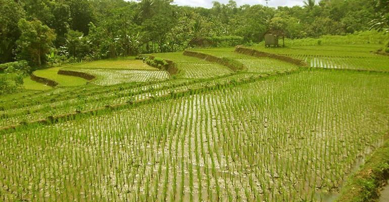 lotus foods field