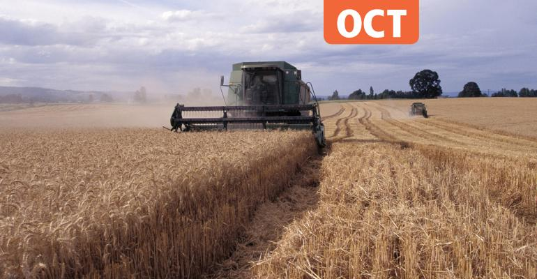 Organic wheat harvest