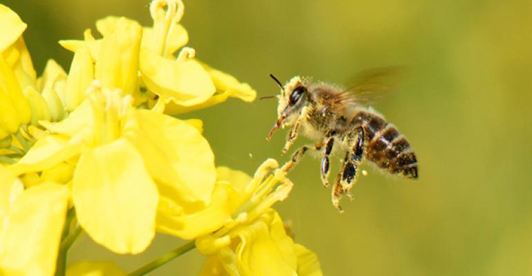 organic-and-bees.jpg