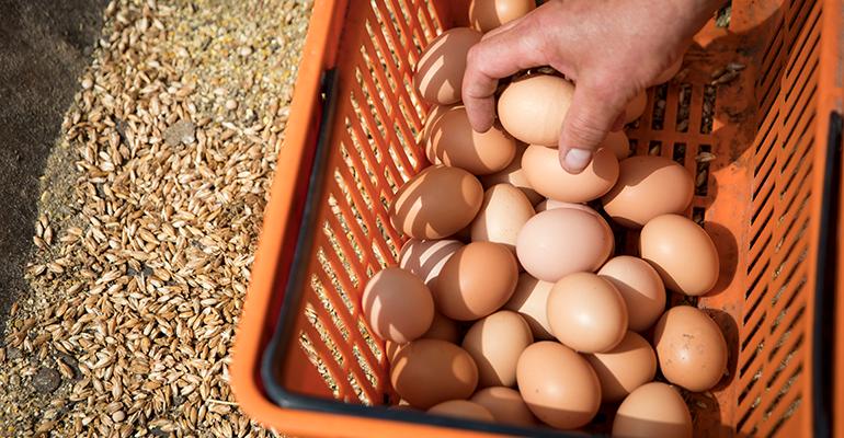 organic-eggs.png