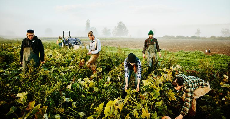 organic farmers farming