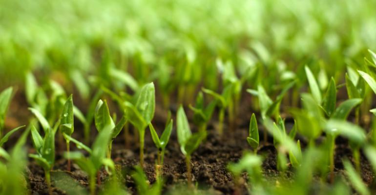 organic seedings
