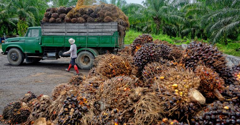 ethical palm oil production