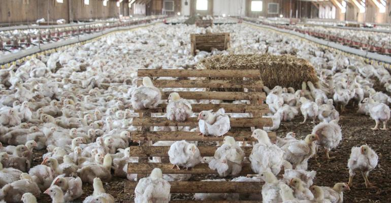 Perdue Farms shows off a new chicken house