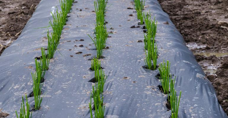 organic farming uses plastic mulch and that's a problem