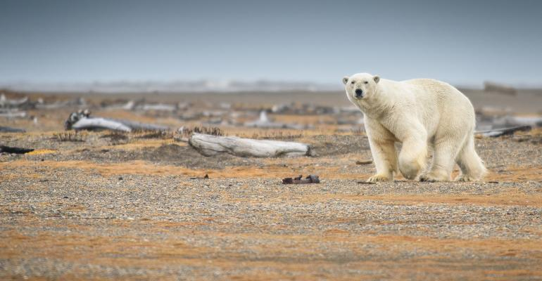 polar-bear-climate-change-promo-Getty.jpg