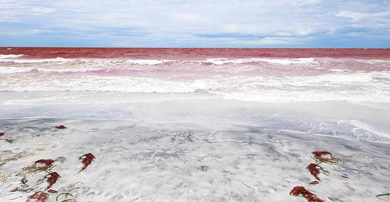 red-tide.jpg