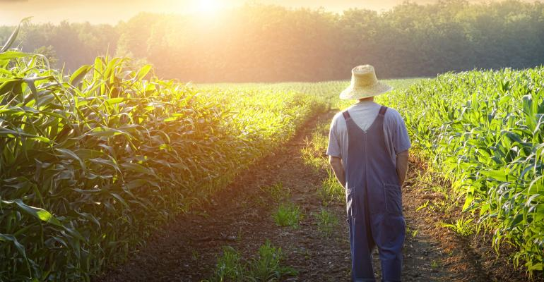 man walking and thinking in a corn field