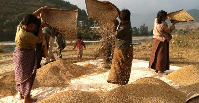 Bhutanese women rice farmers