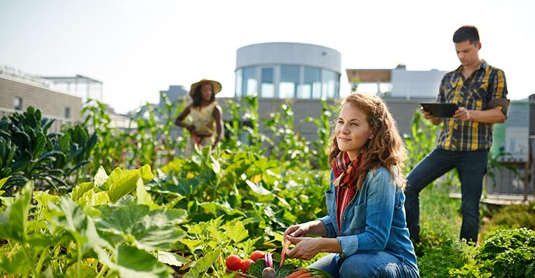 rooftop-farming.jpg