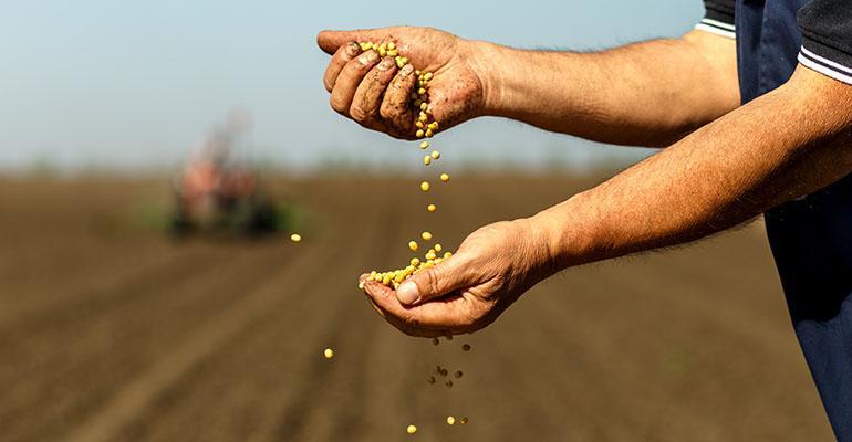seed-farmer-pesticide.jpg