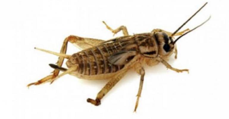 small-field-crickets