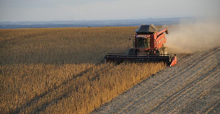 soybeans-1543071_1920.jpg