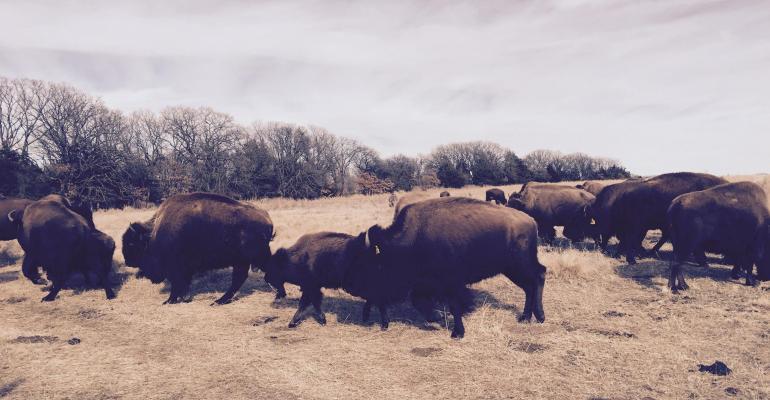 Tanka Bar restore buffalo land