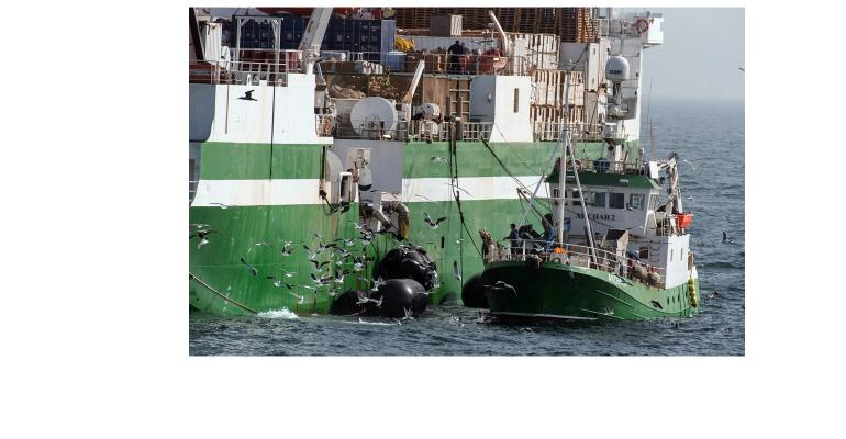 Fishing vessels transfer catches to other ships