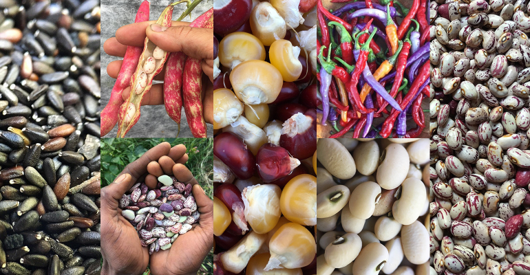 Truelove Seeds collage