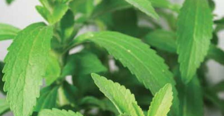 London calling for PureCircle as EU stevia approval beckons