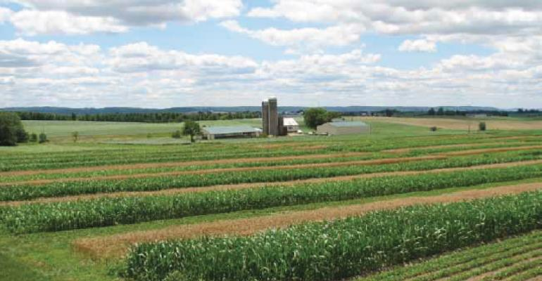 Organic trumps conventional farming in Rodale Institute's 30-year study