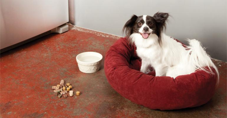 Willow the authors papillon poses for Natural Foods Merchandiser magazine