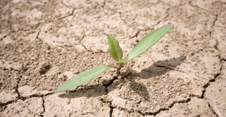 Can organic farming feed the world during drought?